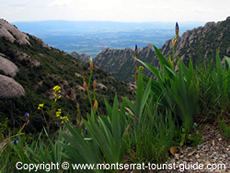 Montserrat nature views